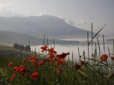 Morning Fog, Castelluccio Di Norcia, Highland of Castelluccio Di Norcia, Norcia, Umbria, Italy-Angelo Cavalli-Stretched Canvas Print