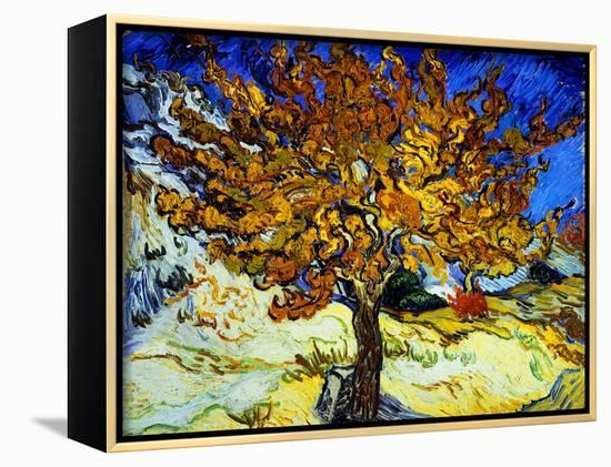 Mulberry Tree, c.1889-Vincent van Gogh-Framed Canvas Print