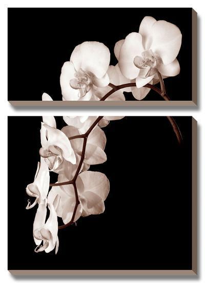 Orchid Dance II-John Rehner-Canvas Art Set