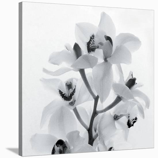 Orchid Spray I-Tom Artin-Stretched Canvas