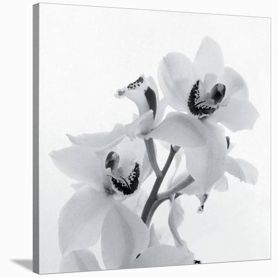 Orchid Spray II-Tom Artin-Stretched Canvas