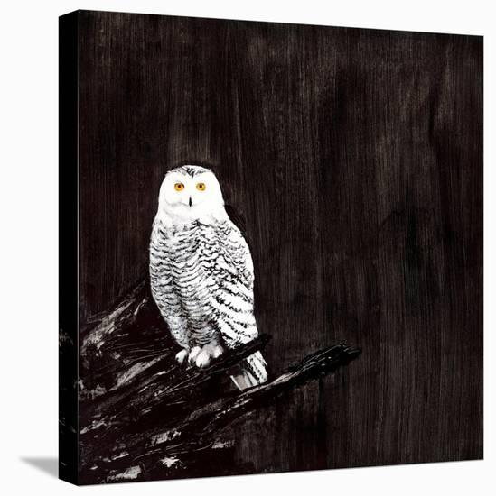 Owl-Paul Ngo-Stretched Canvas Print