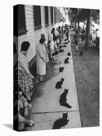 "Owners with Their Black Cats, Waiting in Line For Audition in Movie ""Tales of Terror""-Ralph Crane-Stretched Canvas Print"