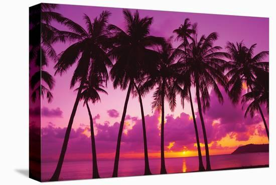 Palm Trees Silhouette Thailand--Stretched Canvas Print