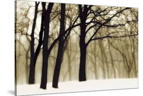 Past Dreams-David Lorenz Winston-Stretched Canvas
