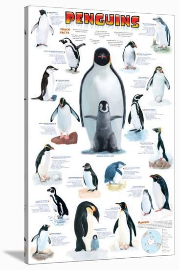 Penguins Chart--Stretched Canvas Print
