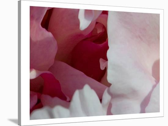Peony Diptych-Rose Anne Colavito-Stretched Canvas Print
