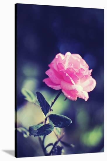 Pink Rose-Carolina Hernández-Stretched Canvas Print