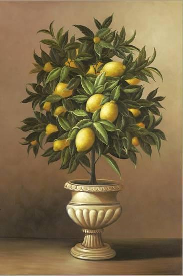 Potted Lemon Tree Stretched Canvas Print Welby Art Com