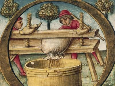 Pressing Grapes, Miniature from the Naturalis Historia by Pliny the Elder, Italy 16th Century--Stretched Canvas Print