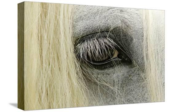 adam-jones-close-up-details-of-gypsy-vanner-horse-eyeball-crestwood-kentucky