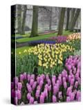 Hyacinth and tulip flowers  Keukenhof Gardens  Lisse  Netherlands