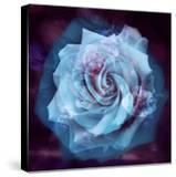 Composing of a White Rose Layered with Blue Tones and Blossoms