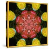 Symmetric Ornament from Flowers  Photographic Layer Work