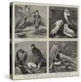 Specimens from Mr Booth's Museum of British Birds  Brighton