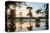 Bald Cypress at Sunset  Atchafalaya Basin  Louisiana  USA