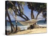 Hammock Tied Between Trees  North Shore Beach  St Croix  US Virgin Islands