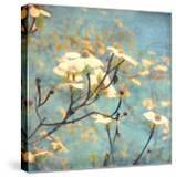 Dogwood II - Blossoming Tree