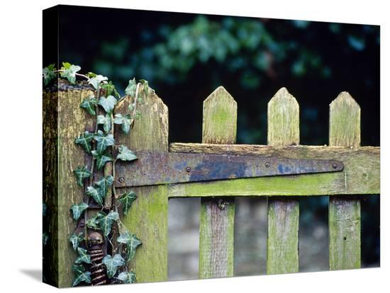 andre-jordan-wooden-gate-with-ivy-hedera-december