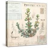 Portulacaria…Sketchbook