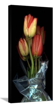 anna-miller-tulips-in-wrap-on-black-background