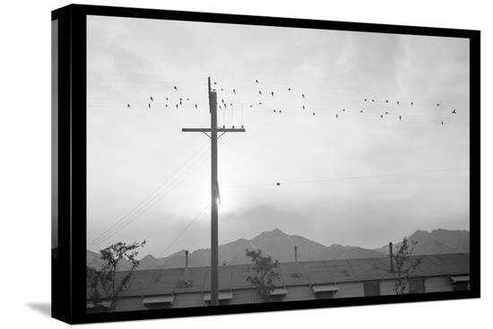 ansel-adams-birds-on-wire