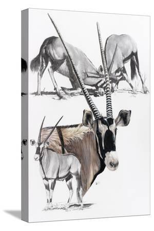 barbara-keith-gemsbok