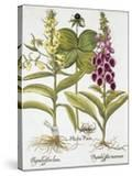 Herb Paris  Common Foxglove and Large Yellow Foxglove