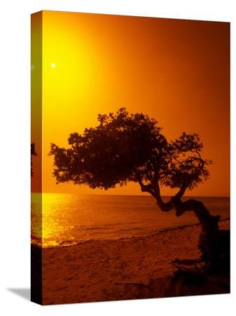 bill-bachmann-lone-divi-divi-tree-at-sunset-aruba