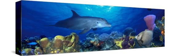 bottle-nosed-dolphin-and-gray-angelfish-on-coral-reef-in-the-sea