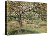 Apple Tree in Eragny  1884