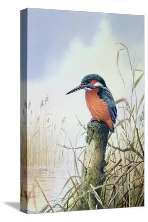 carl-donner-kingfisher
