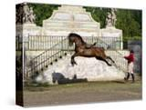 Lusitano Horse  Man Training Stallion In Dressage Steps  The High Leap