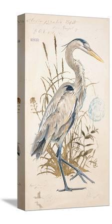 chad-barrett-great-blue-heron
