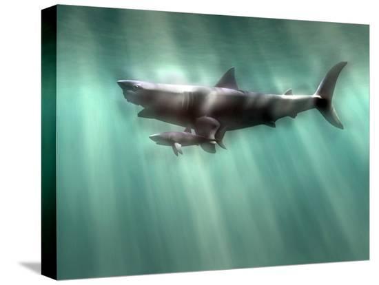 christian-darkin-megalodon-shark-and-great-white