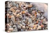 Incoming Surf and Seashells on Sanibel Island  Florida  USA