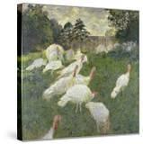 The Turkeys  1877