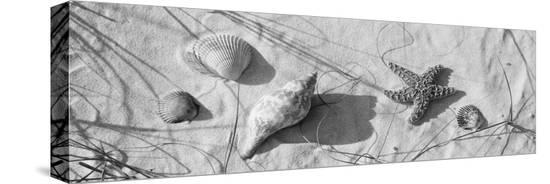 close-up-of-a-starfish-and-seashells-on-the-beach-dauphin-island-alabama-usa