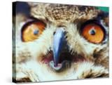 Close Up of Eagle Owl Beak