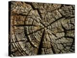 Close-Up of Pattern of Natural Wood Surface