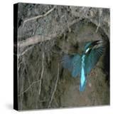 Kingfisher and Worm
