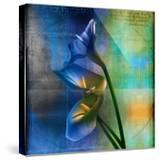 Calla Lilies and Colorful Patterns