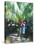Coconut Shade  2014