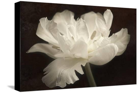 cora-niele-white-tulip-ii