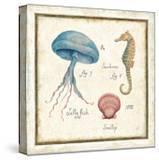 Oceanography III