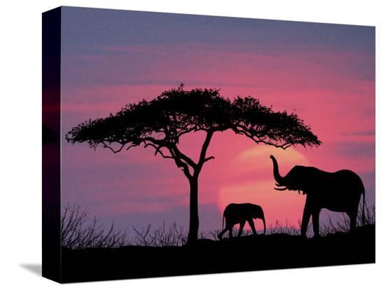 david-davis-silhouette-of-elephants-and-tree