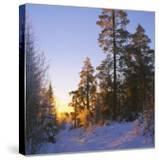Winter Sunset in the Forest Near Oslo  Norway  Scandinavia  Europe