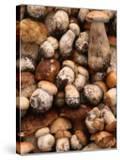 Field Mushrooms for Sale by Roadside Near Cluj-Napoca  Cluj-Napoca  Cluj  Romania