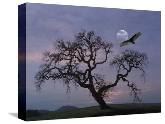 diane-miller-oak-tree-silhouetted-against-cloudy-sunrise-with-partially-obscured-moon-and-flying-vulture