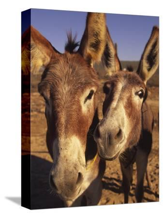 douglas-peebles-burros-cabo-san-lucas-baja-california-mexico